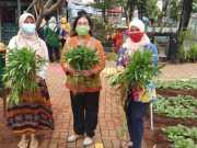 RPTRA Puspa Indah Panen Sayur-mayur di Tengah Pandemi